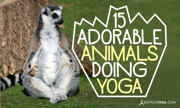 15 Adorable Animals Doing Yoga