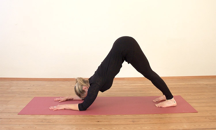 5 Reasons You Should Practice Dolphin Pose
