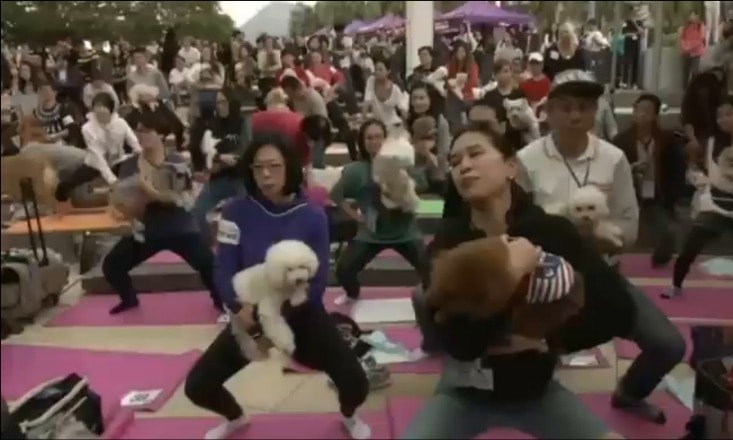 World Record Set for Largest Dog Yoga Class in Hong Kong